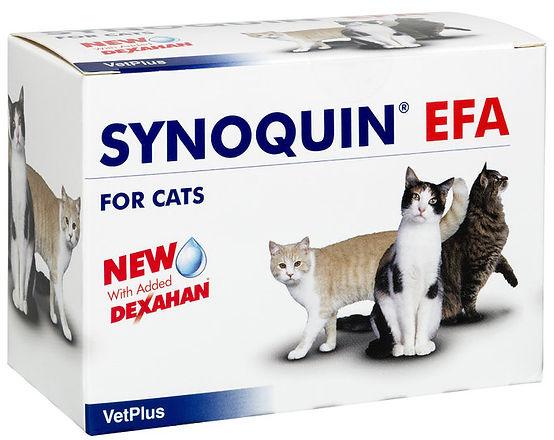 Synoquin_Efa_Cat.jpg