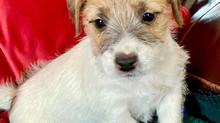 Precious Tess' pups go home