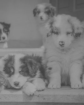 Puppies_edited_edited.jpg