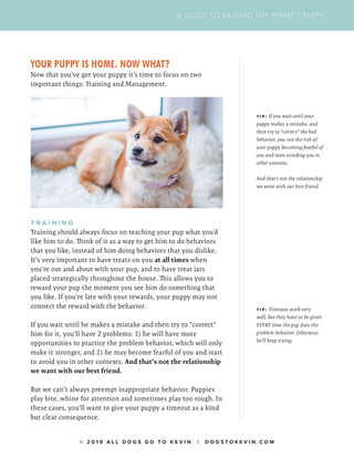 Raising a Puppy5.jpg