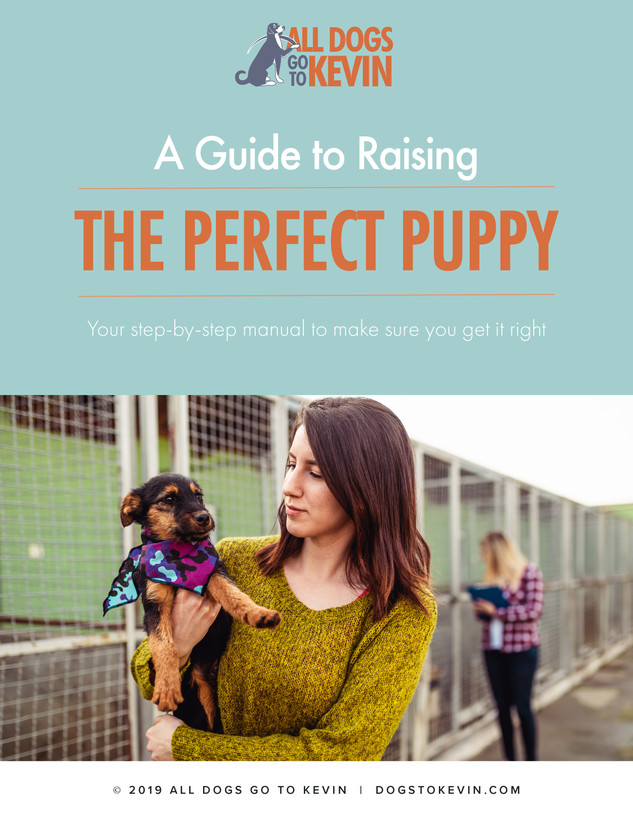Raising a Puppy.jpg