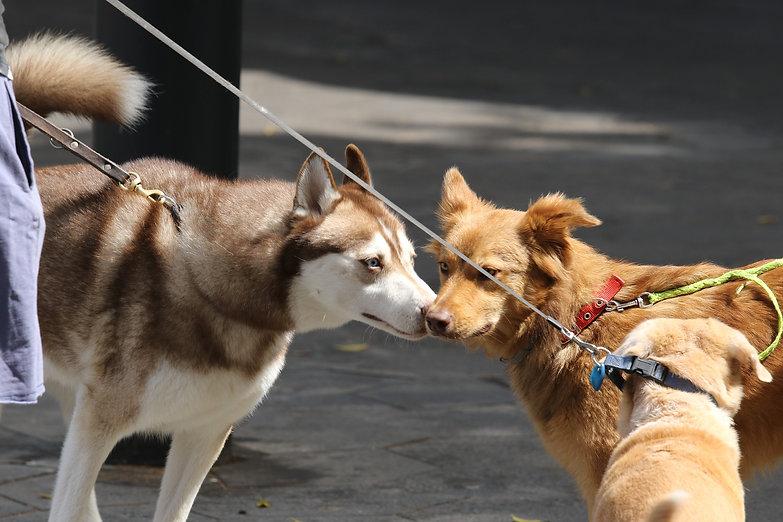 dogs-4176389_1920.jpg