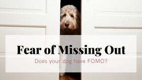 Does your Dog have FOMO?