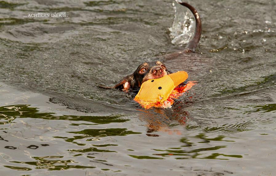 schwimmen4.jpg