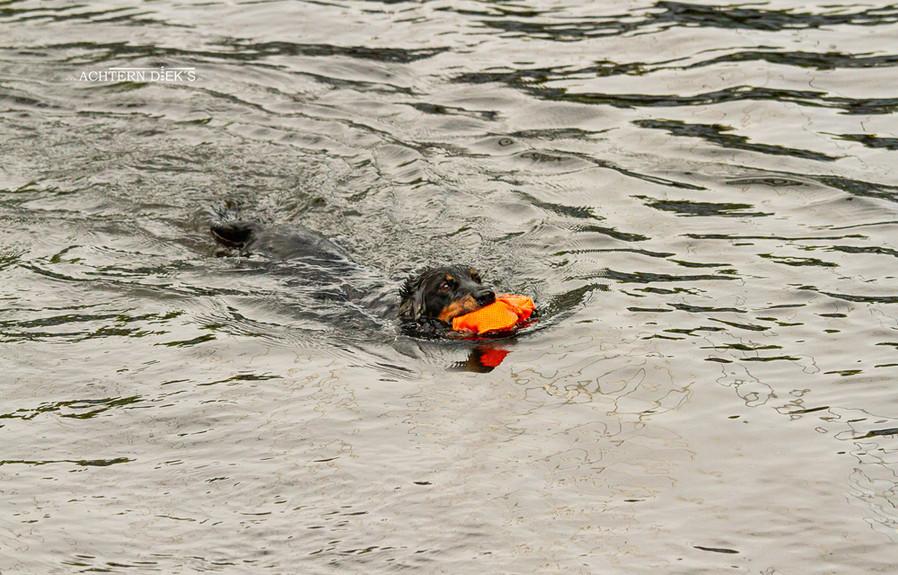 schwimmen5.jpg