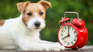 Cachorro-relogio-Petlove-1280x720.jpg