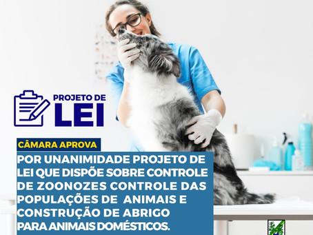 Câmara aprova PL que dispõe sobre controle de zoonozes e construção de abrigo para animais