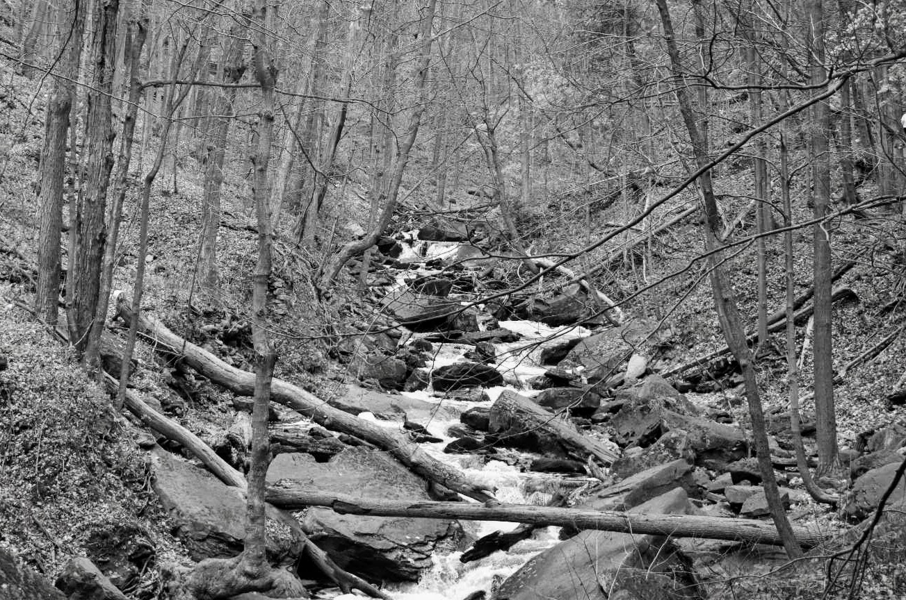 Black and white still of the Smokey Hollow Trail, Hamilton