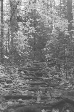 Black and white still of forest steps, Algonquin Provincial Park