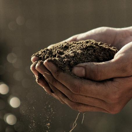 Composting 101: Repurposing food waste for beginners