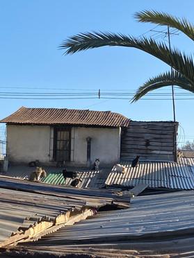 Colonia techera Cerro Navia