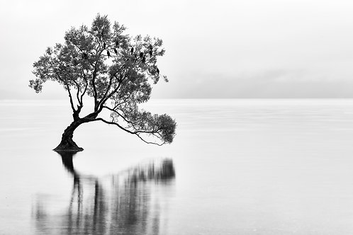 The Lonely Tree - 30x40cm - Gallery Edition