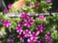 Flutes & Flowers 2020 No.13.jpg