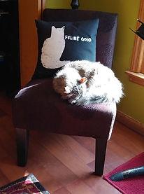 Studio Cat --Misty.jpg