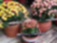 Fall flutes & flowers No.1.jpg