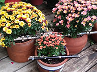Fall flutes & flowers No.1.jpg