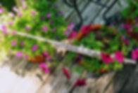 Flutes & Flowers 2020 No.15.jpg
