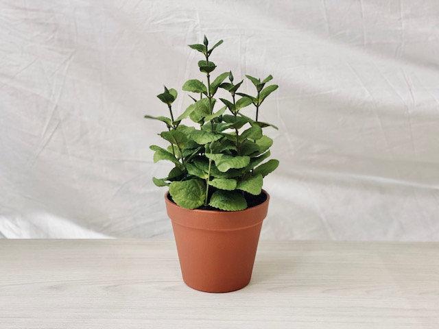 Planta de hierbas menta
