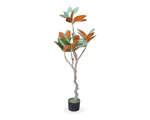 Árbol Magnolio