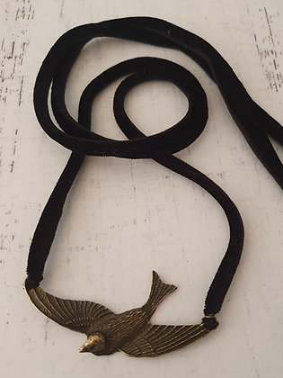 Pájaro Terciopelo Negro