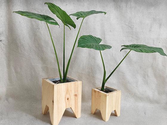 Macetas cuadradas madera
