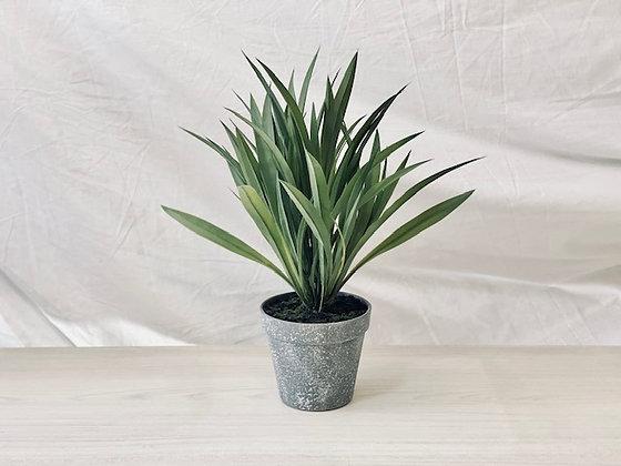 Planta hojas largas y finas