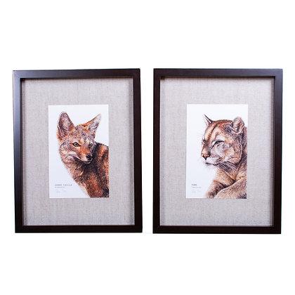 Cuadros grabado Huemul y Puma 41x33 cm