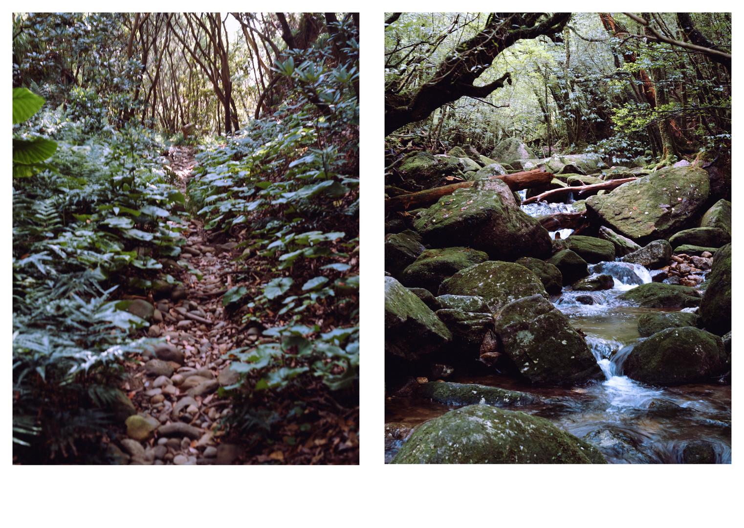 屋久島最終版印刷用05187.jpg