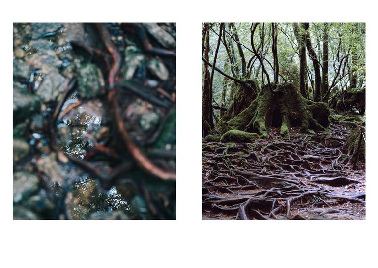 屋久島最終版印刷用051821.jpg