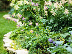 5 ไอเดีย ยกระดับความสวยให้สวนง่ายๆ ด้วยการใช้หินแต่งขอบแปลงต้นไม้