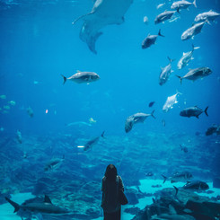 Aquaponics awareness in UK higher education [electronic resource]