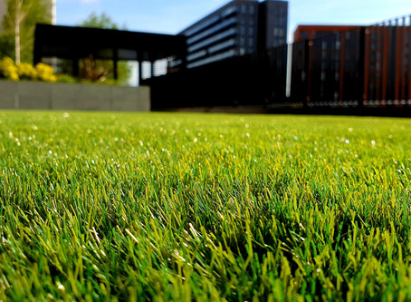 7 Tips for Healthy Lawns [Troubleshooting Guide]