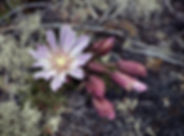 flower-2372987_1920.jpg