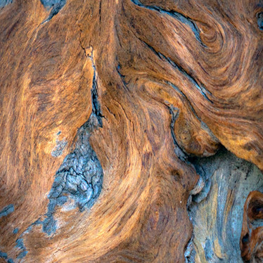 Nature's Art in Wood-1.jpg