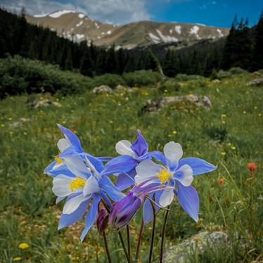Columbine Mountain Majesty-1.jpg