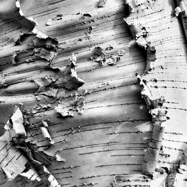 Peeling away aspen-2.jpg