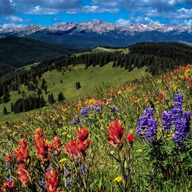 Wild Flower Oasis v2.jpg