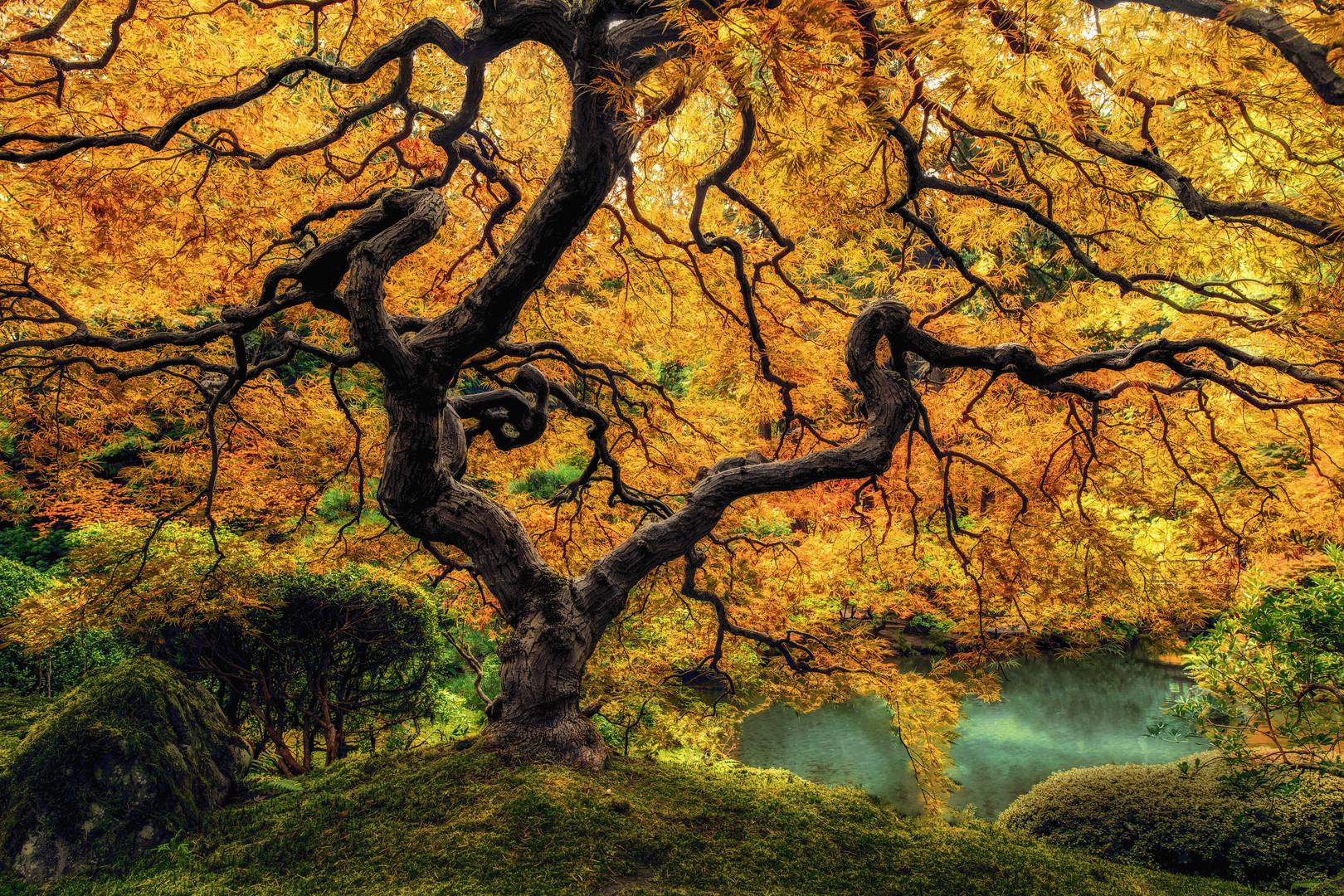 Fall Wonder Tree Dreamin-1.jpg