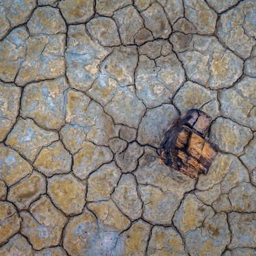 Petrified Landscape.jpg