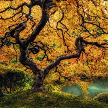 Wonder Tree Dream Final1 v2.jpg