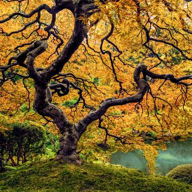 Fall Wonder Tree Final1 v2.jpg