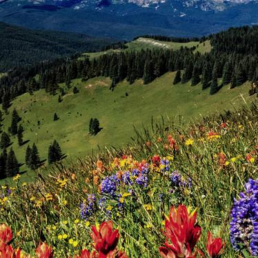 Wildflower Oasis Vertical-1.jpg