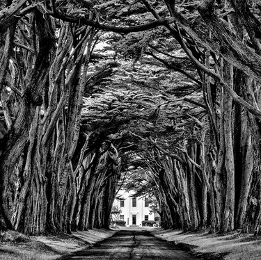 White House at the End of the Road-B&W v2-49.jpg
