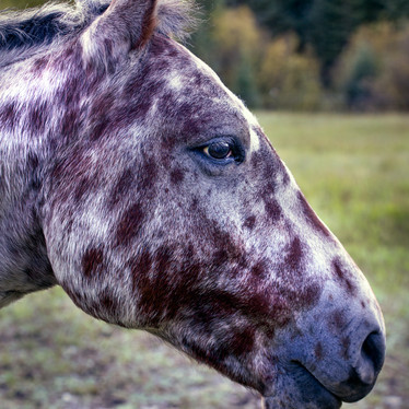 Spotted Horse.jpg