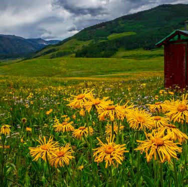 Crested Butte Wild Flowers-44-Edit.jpg