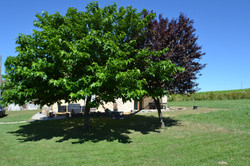 The Mulberry Tree at Le Mûrier gite