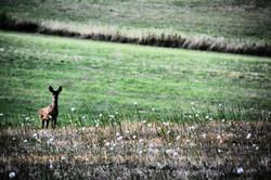 Deer spotting at Cousserat
