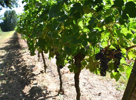 Bordeaux wine seasons