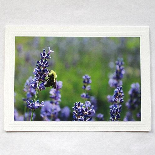 Bee in Lavender Field Card