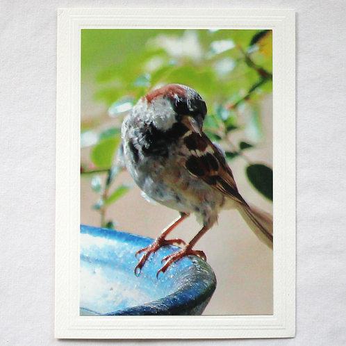 House Sparrow Card